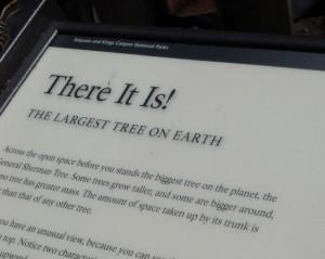 bord sequoia