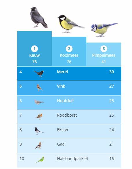vogeltelling buurt
