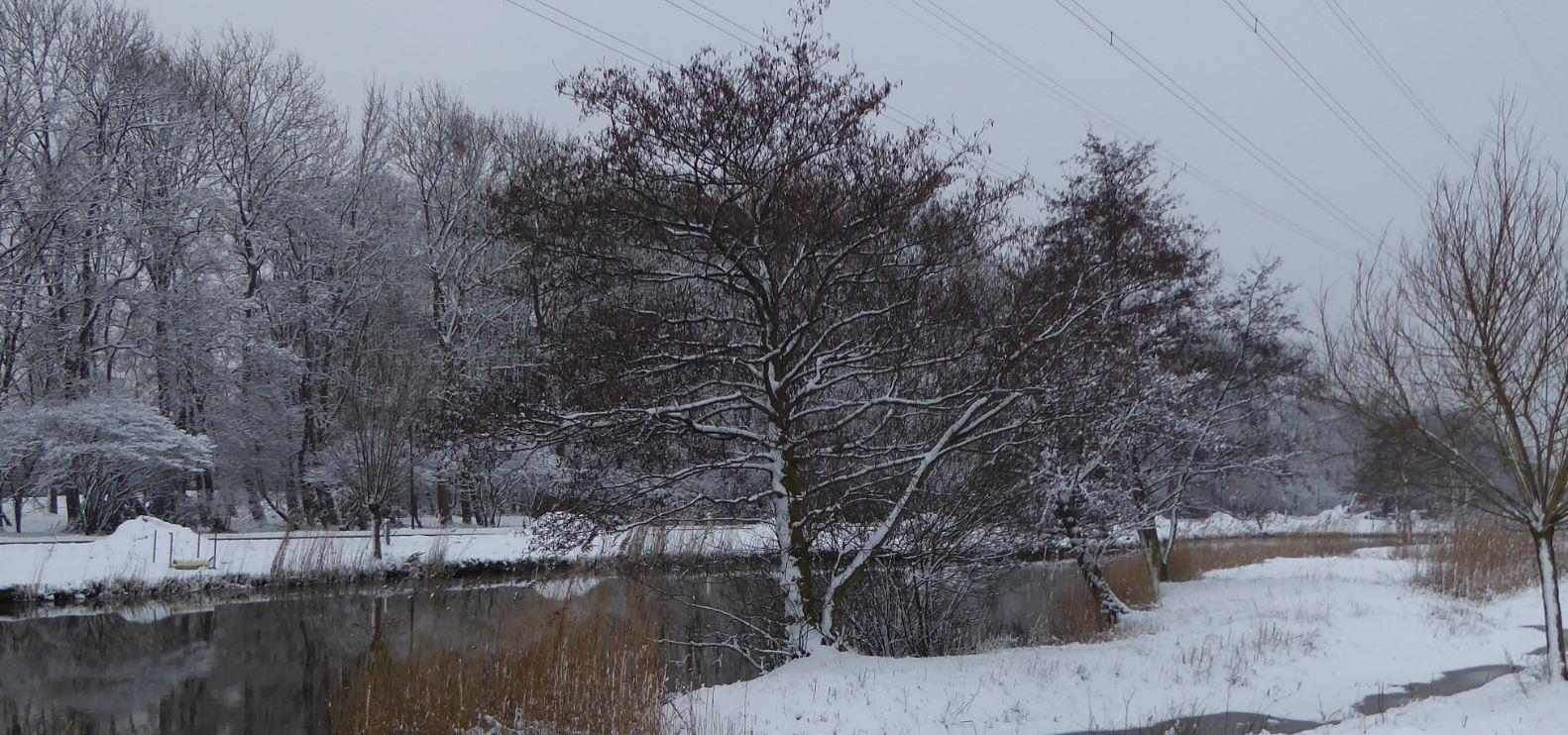 0 bomen