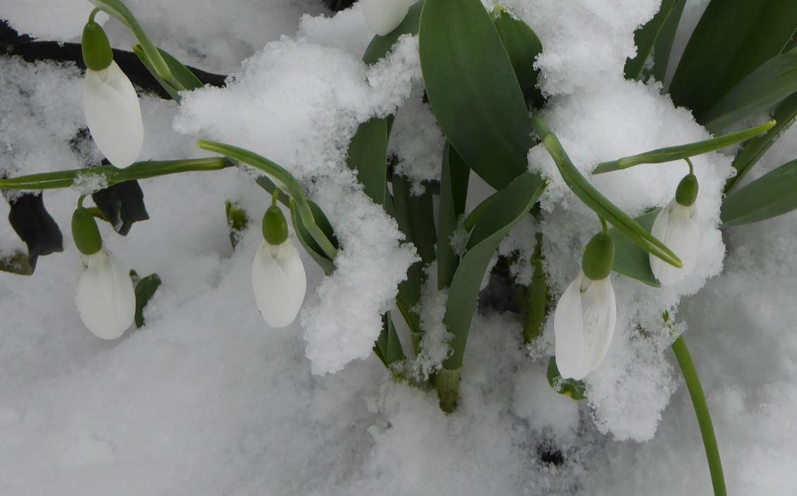 0 sneeuwklokjes