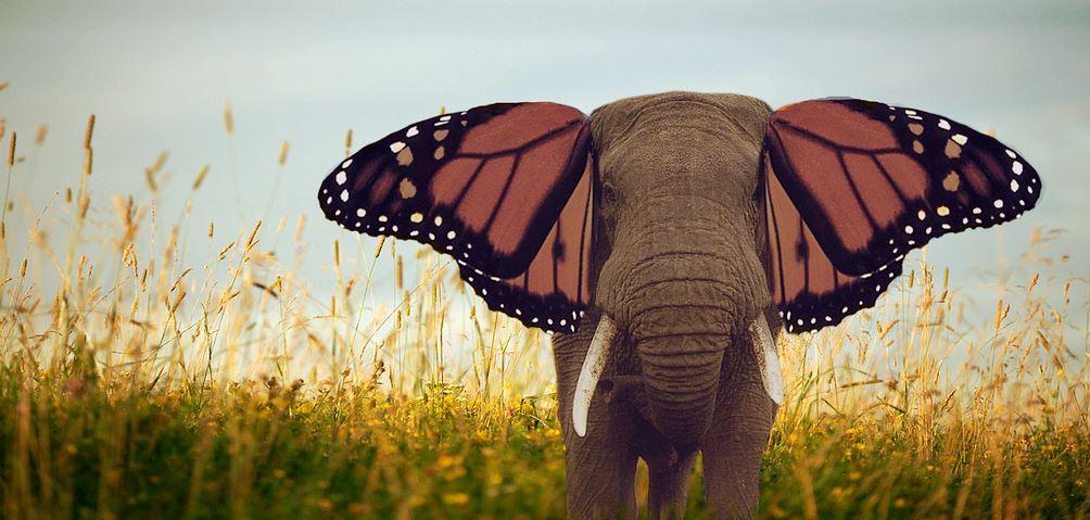 000 olifant