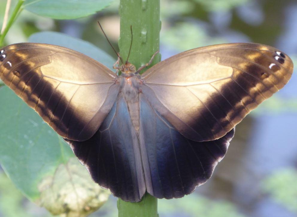 000 vlinder