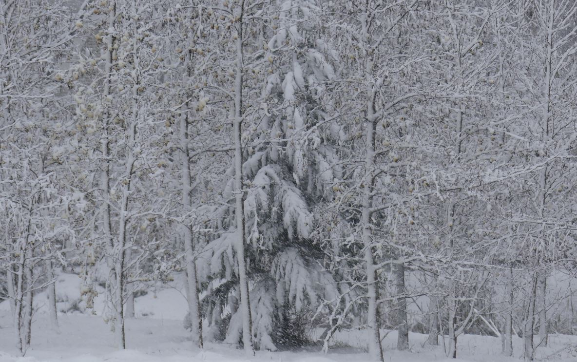 0 sneeuw 2JPG