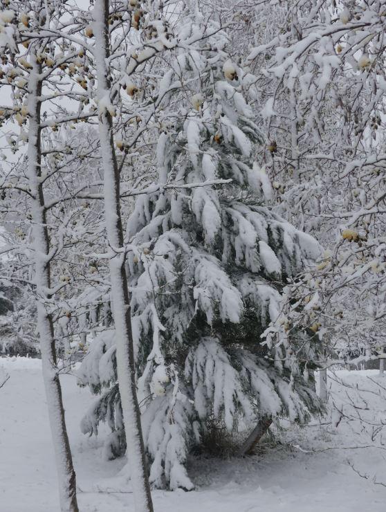 0 sneeuw 3