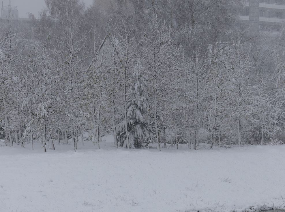 0 sneeuw.1