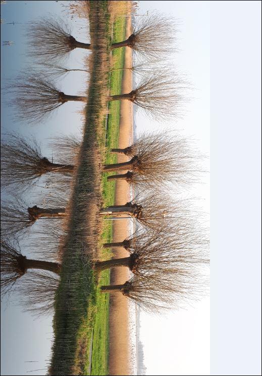 bomen 3