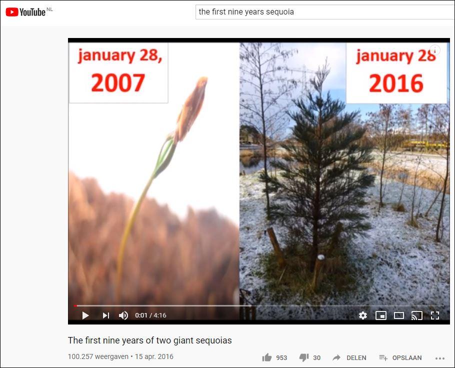 negen jaar sequoia
