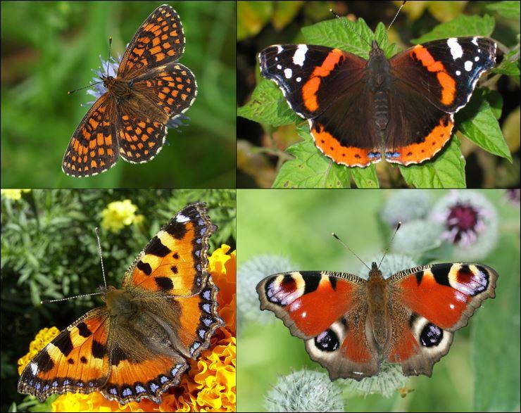 000000 vlinders