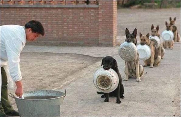 0 hond 2