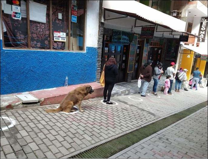 0 hond