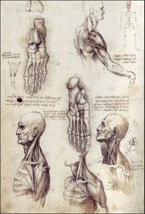 20 leonardo tekening lichaam