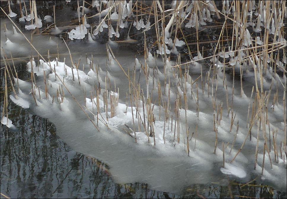 sneeuw ms