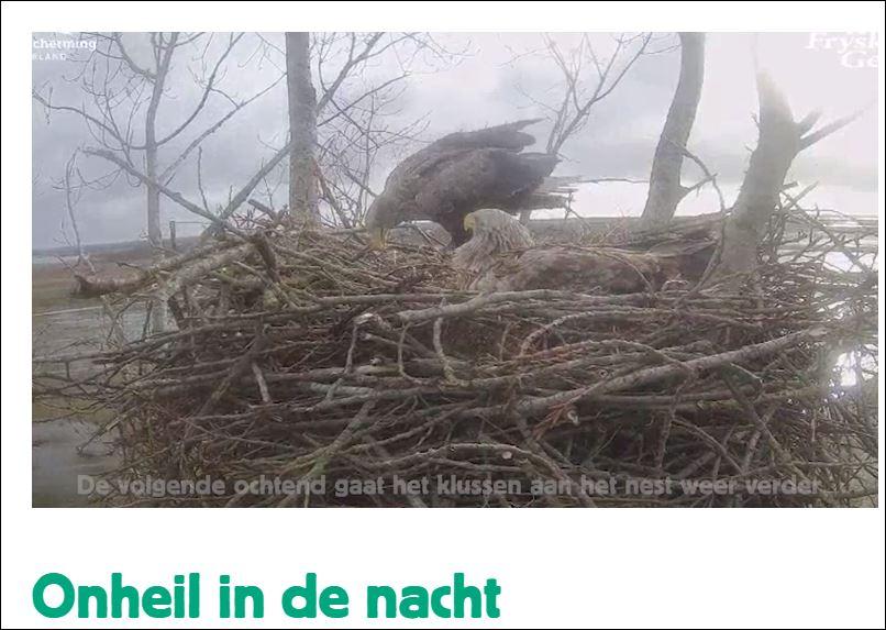 1 0 vogels camera 3