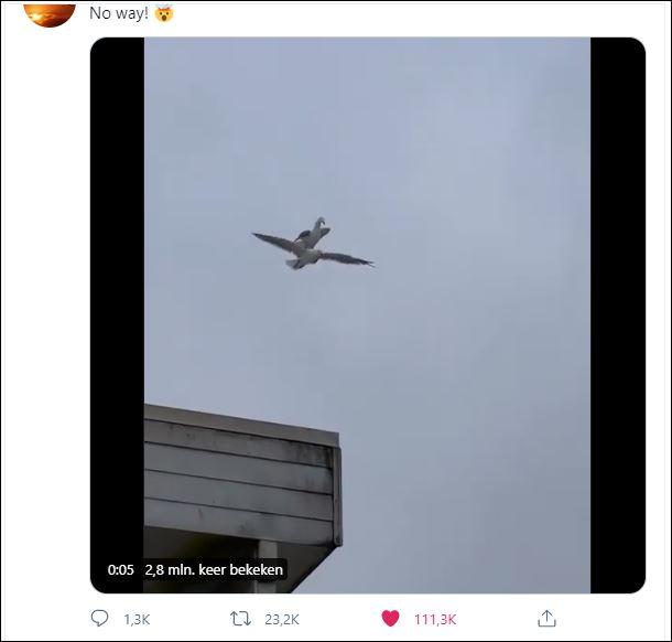 00000 vogels